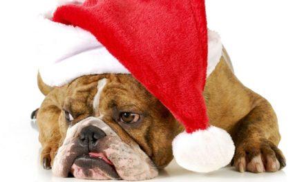 ¡Felices Fiestas les desean el staff de 3gb.com.mx!